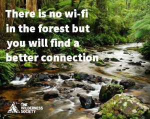 There is no WiFi in the forest but you'll find a better connection