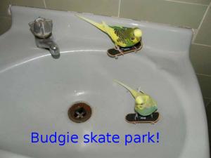 Budgie skate park